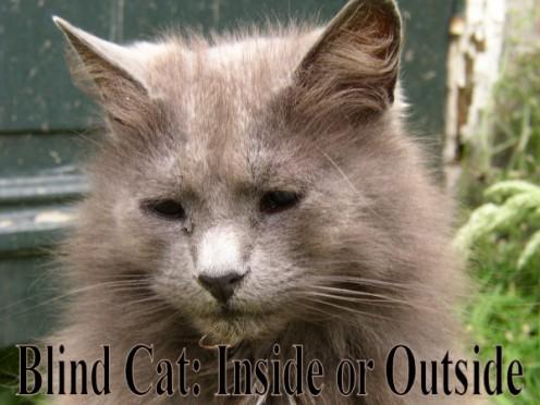 Blind Cat: Inside or Outside