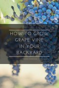 How to Grow Grape Vine in Your Backyard