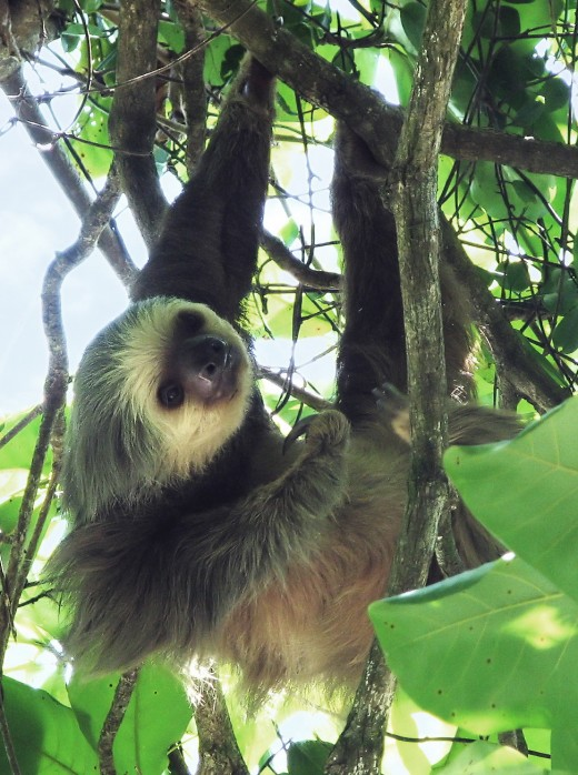 The sloth has lived in the rainforest for thousands of years and so has soaked up the rare energies of the rainforest.