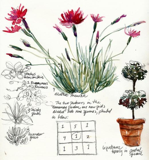Garden Journal Sketch