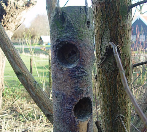 Wood log Bird feeder