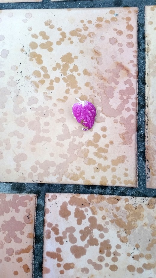 Lovely little petal on the patio