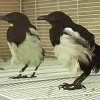 Animals Who RecognizeThemselves in the Mirror
