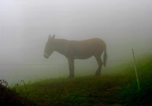 The donkey who speaks alone.