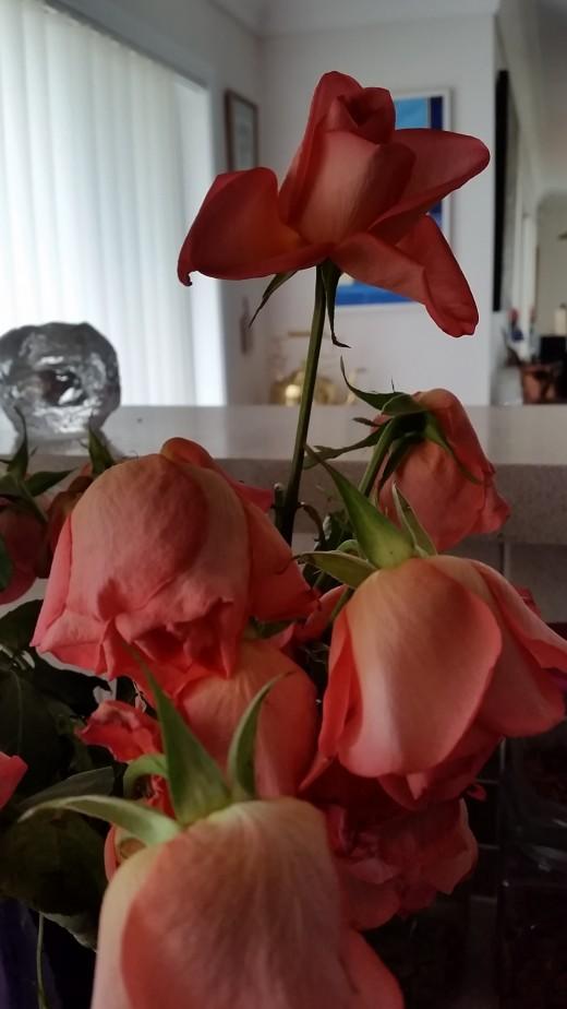 Tired little roses