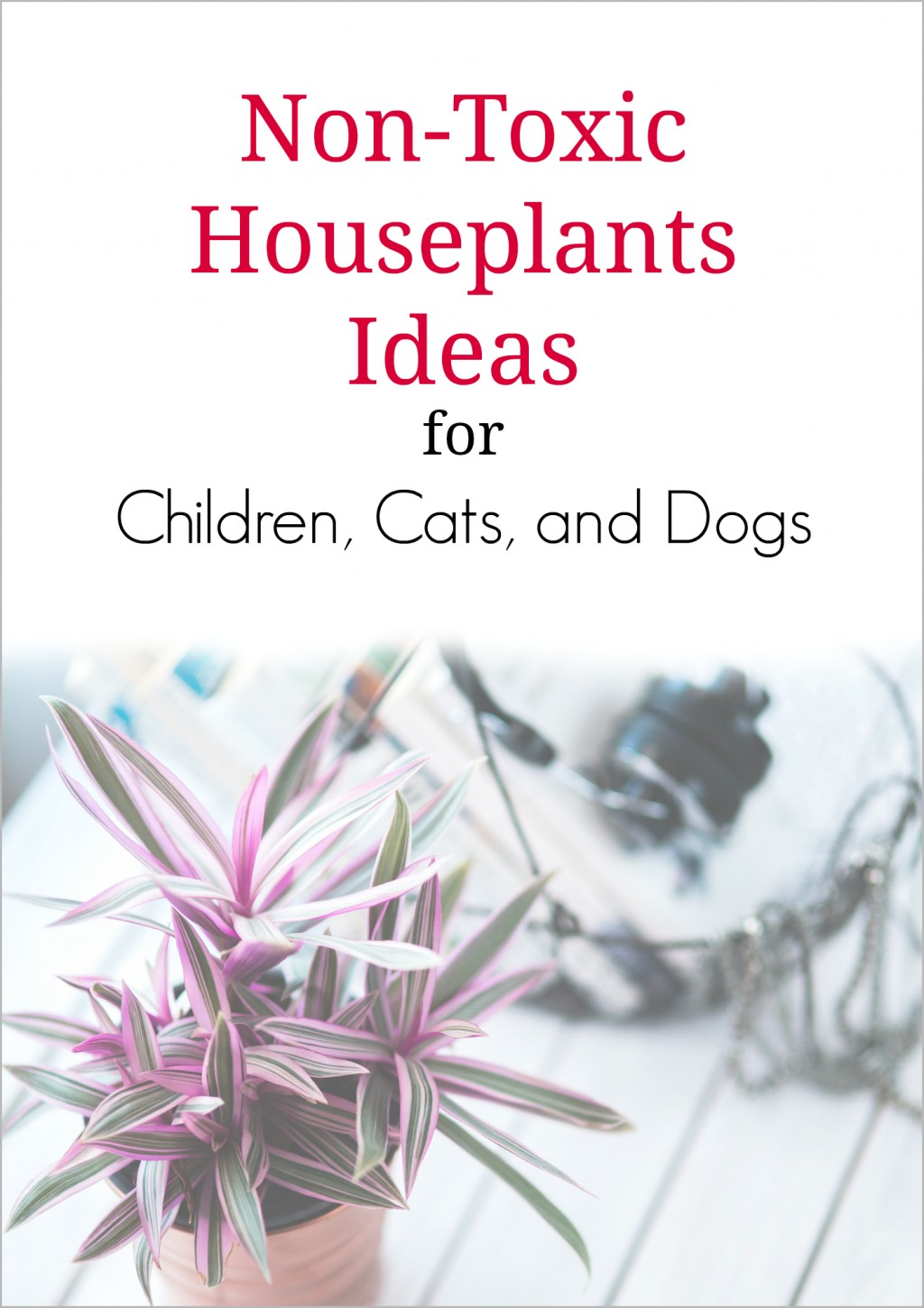Non toxic house plants for children cats and dogs Houseplants not toxic to cats