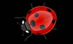 The Inspirational Ladybug