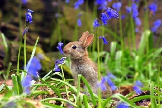 Rabbits, always waiting for the ringtone, the ringtone of danger.