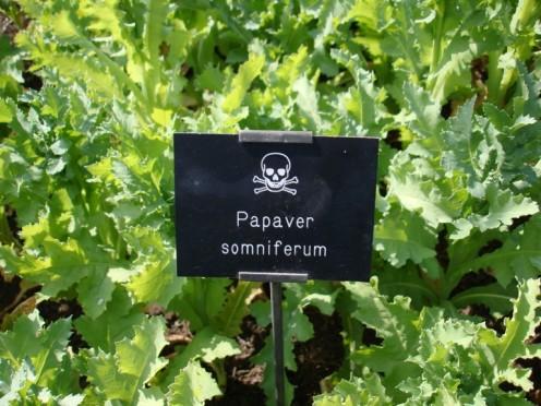 Poison Garden Plants