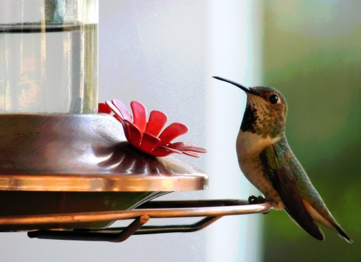 Undyed nectar (white cane sugar and water) is safest for hummingbirds.