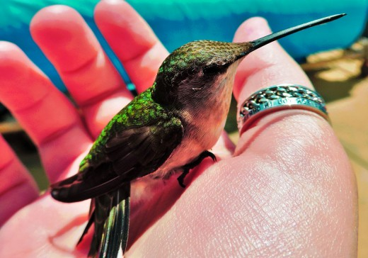 Try getting other species of wild birds to sit in your hands.