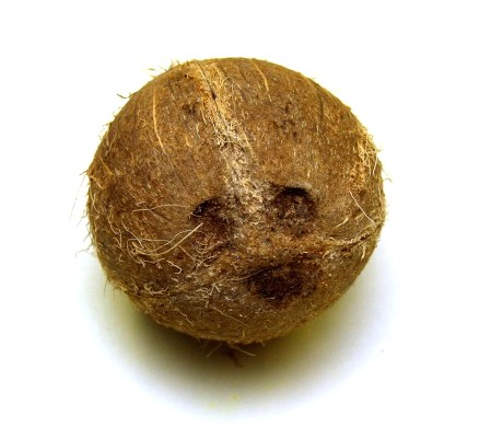 Coconuts may have a hard shell but the eyes are the entry point.