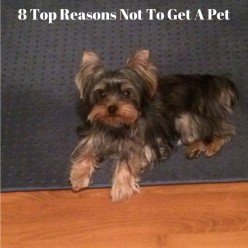 8 Top Reasons Not to Get a Pet