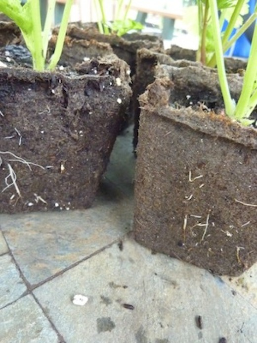 Now you can avoid using flimsy plastic seed starting containers.