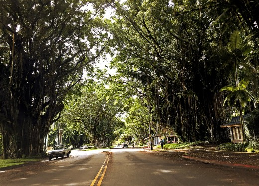 Quiet tree-shaded Bayan Drive.