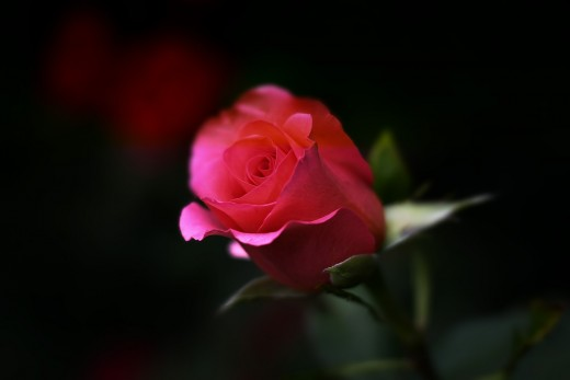 May All of Us Discover That Missing Link Which Places Back the Aroma of a Rose Into Our Hearts