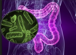 An Alliance Between Intestinal Micro-flora And Immunity