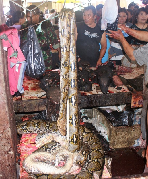 Python meat for sale in Sulawesi.