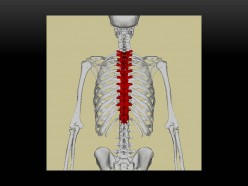 Mistakes when Opting for Family Chiropractic Clinic, Options Available for you to Avoid Mistakes