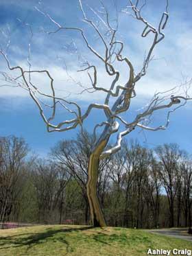 Silver Tree by Roxy Paine, Crystal Bridges Museum, Bentonville, AR