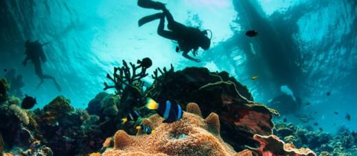 Aliwal Shoal reef, Umkomaas, KwaZulu-Natal, South Africa