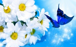 White Daisies and Butterflies