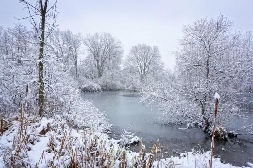 Quiet Hush Michigan Winter Scene