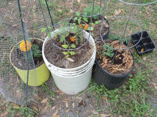 Container gardening is the easiest way to fit in vegetable plants like tomato and cucumbers. Note companion plants like marigolds which help deter pests without pesticides.