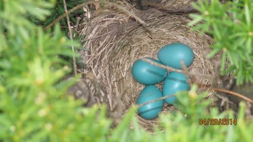 Four Eggs Waiting