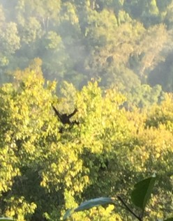 Jungle, Zipwires, treehouses and nature - the Laos Gibbon Experience