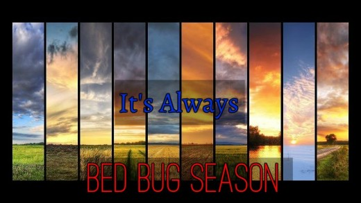 Bed bug infestation can happen anytime through the year.