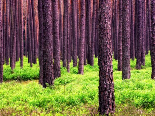 A forest, and trees