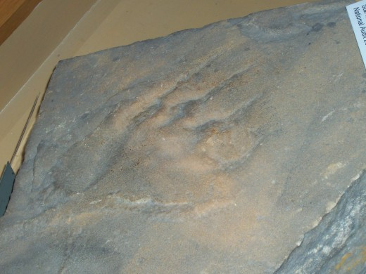 A Dragon Footprint?