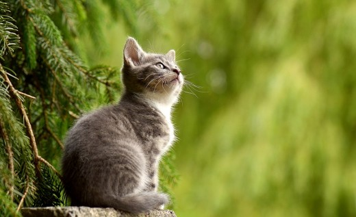 Pros And Cons Of Cats pros and cons of owning a cat | pethelpful