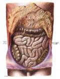 IBS vs IBD: Myths Revealed