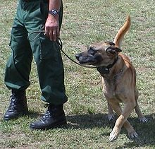Shock collars emit a mild electrical shock that trains dogs to avoid certain animals and focus on a trained target.