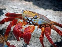 Rawlicious Crab