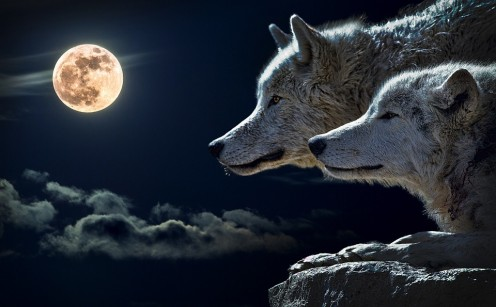 The Occult Truth About Werewolves and Shapeshifters