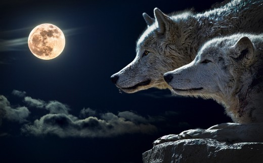 What is the truth about werewolves? Where does this concept come from?