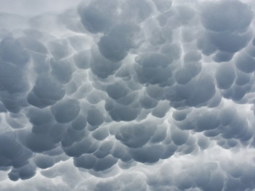 Rain of honour trembling near...