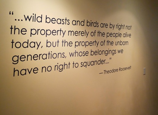 Inspiring quote from Theodore Roosevelt.