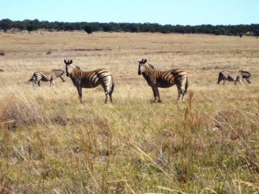 Many beautiful nature and game reserves in South Africa