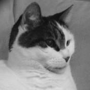 Cherie Kurland profile image