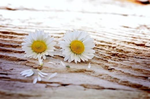Daisy chain of friendship....