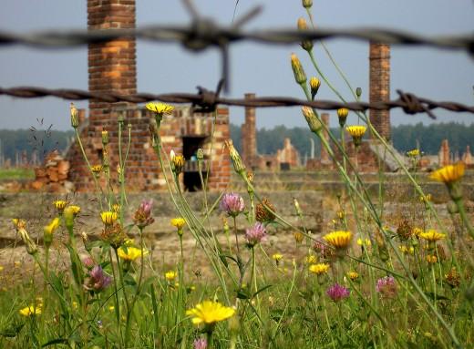 Ruins at Birkenau Concentration Camp, 2006