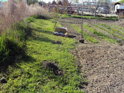 We enjoy our 1/4 Acre garden/orchard lot, and we keep adding fruit and nut trees around its edges.