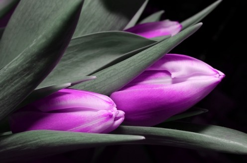 Purple light aglow