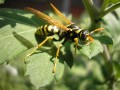 Beneficial Insects: A Must for Organic Gardeners