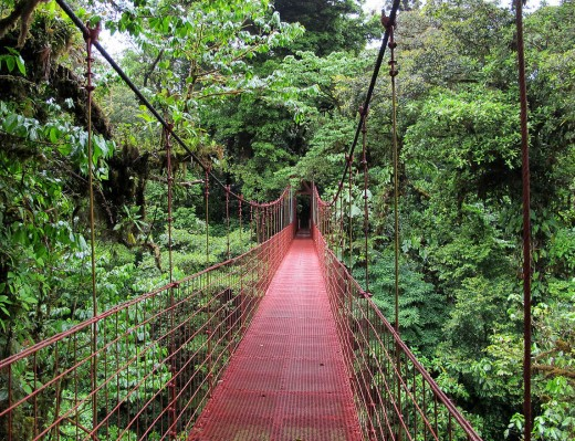 Heavy rains produce many streams and rivers needing suspension bridges for eco tourists like this one.