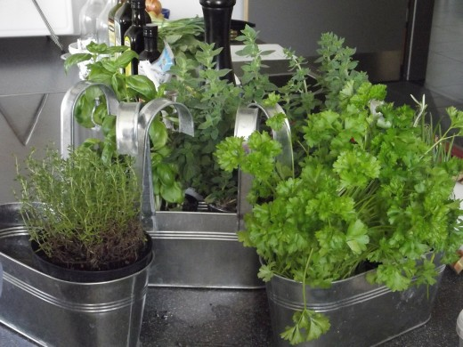 Fresh herbs growing in the kitchen